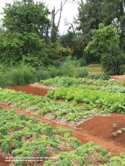One Song Farm – Green Magazine Hawaii